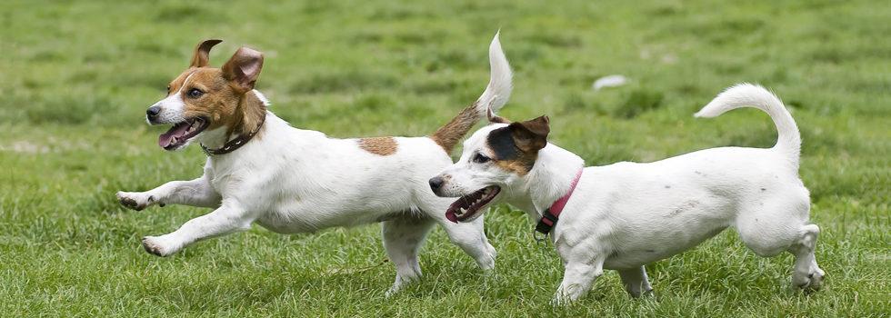 mistelzweig giftig für hunde